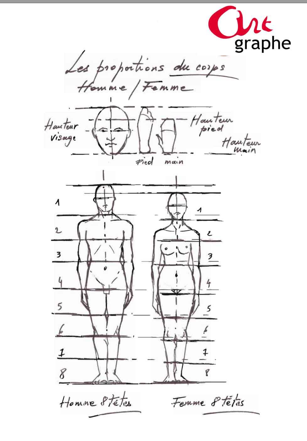 Apprendre à dessiner les proportions du corps