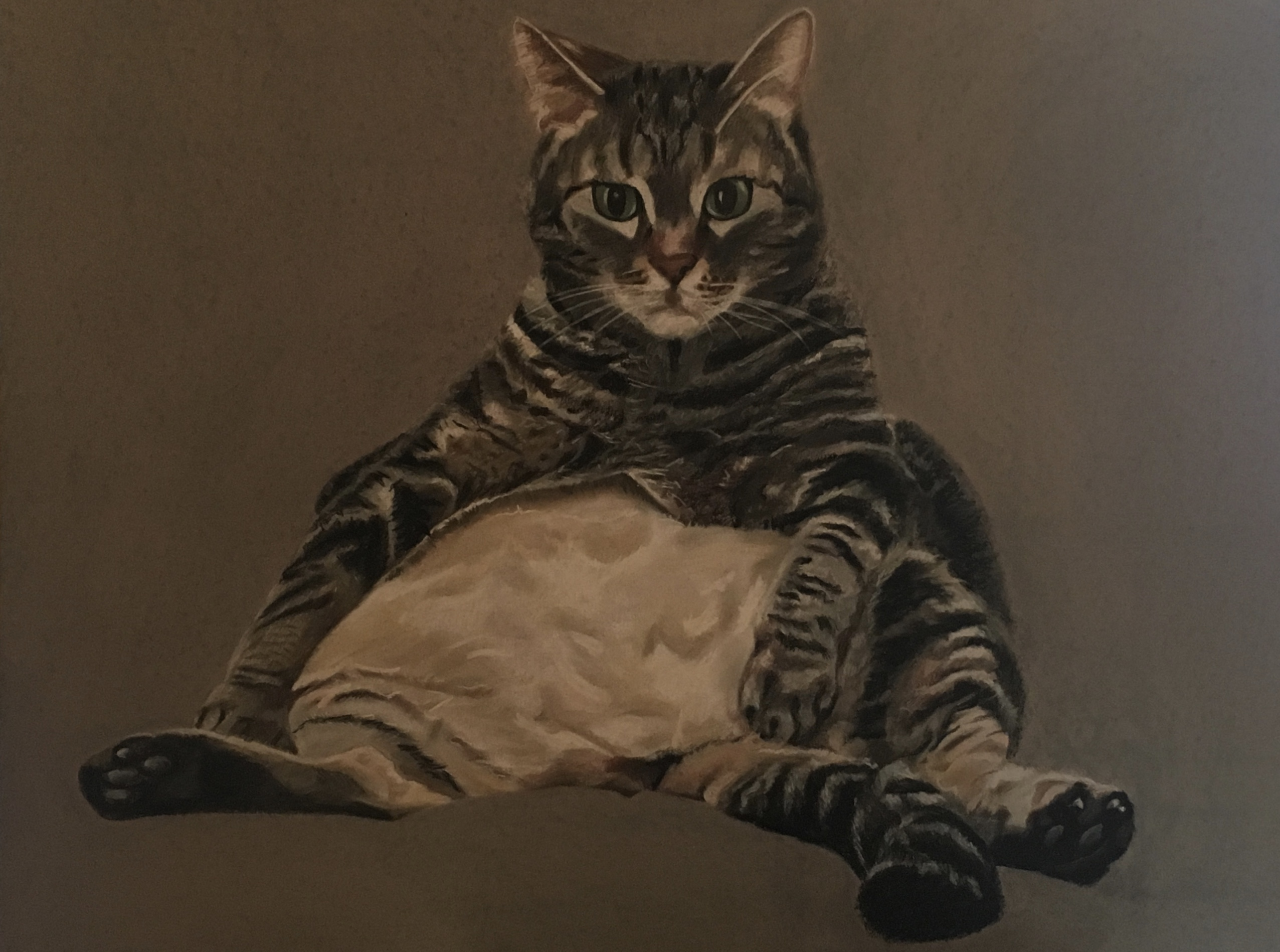Dessin chat  cours de dessin