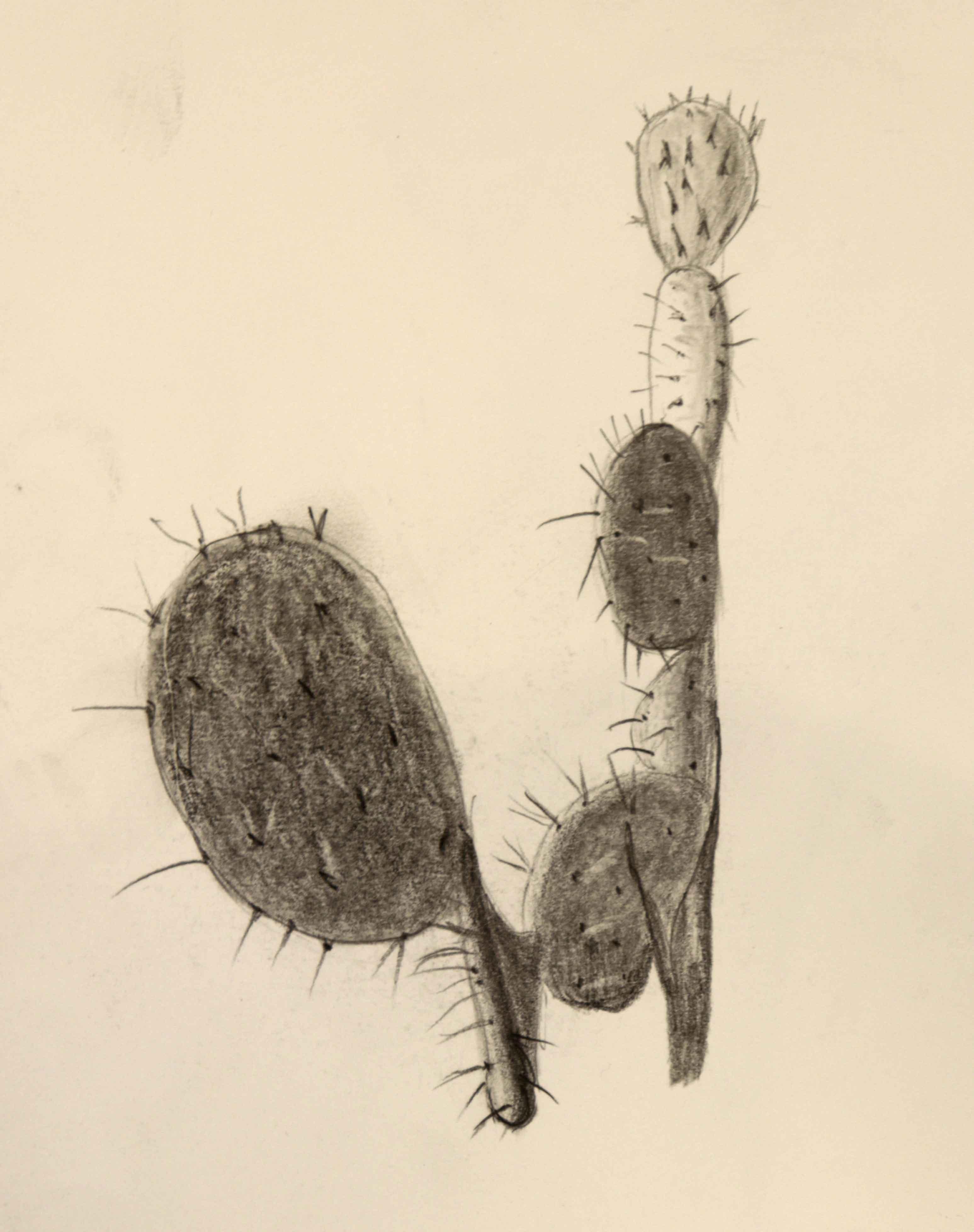 Dessin cactus graphite sur papier color�  cours de dessin