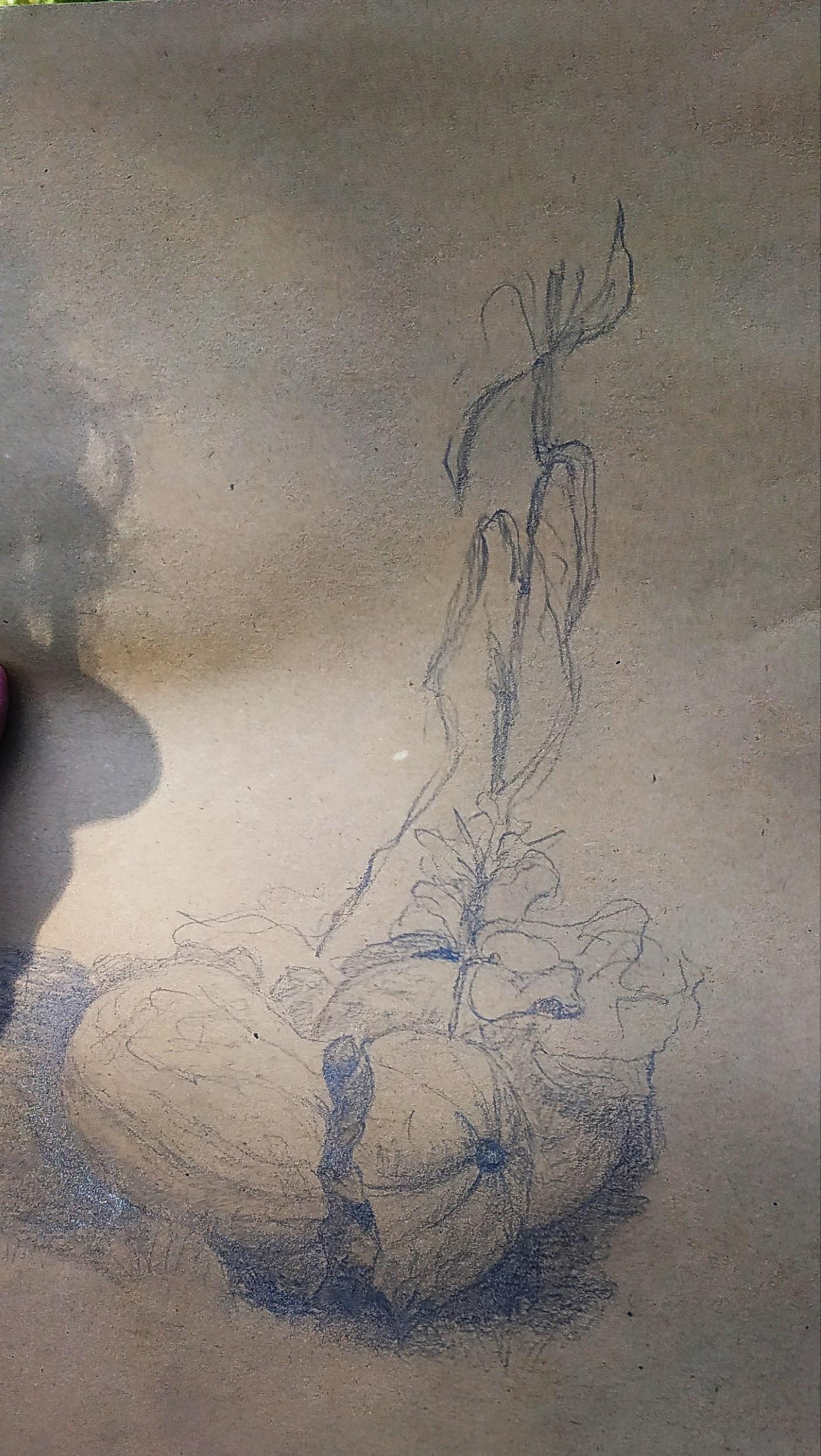 Croquis sur papier grille citrouille  cours de dessin