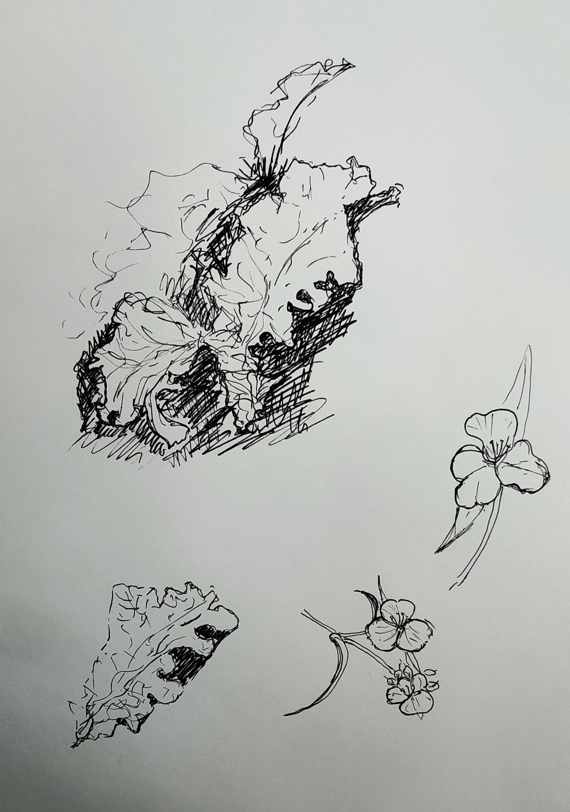 Dessin v�g�tal encre � la plume  cours de dessin