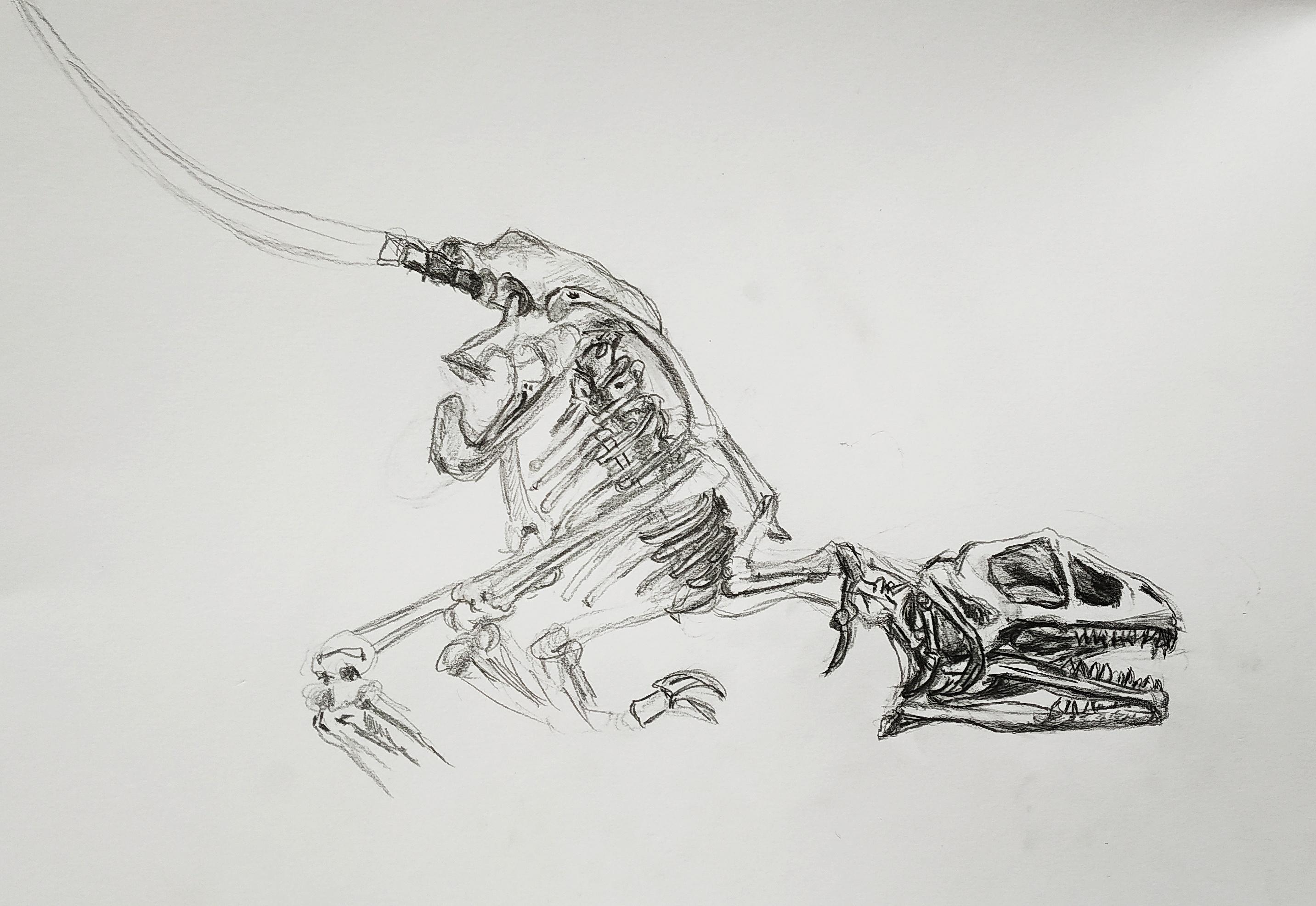 Croquis dinosaure musée d'histoire naturelle Paris  cours de dessin
