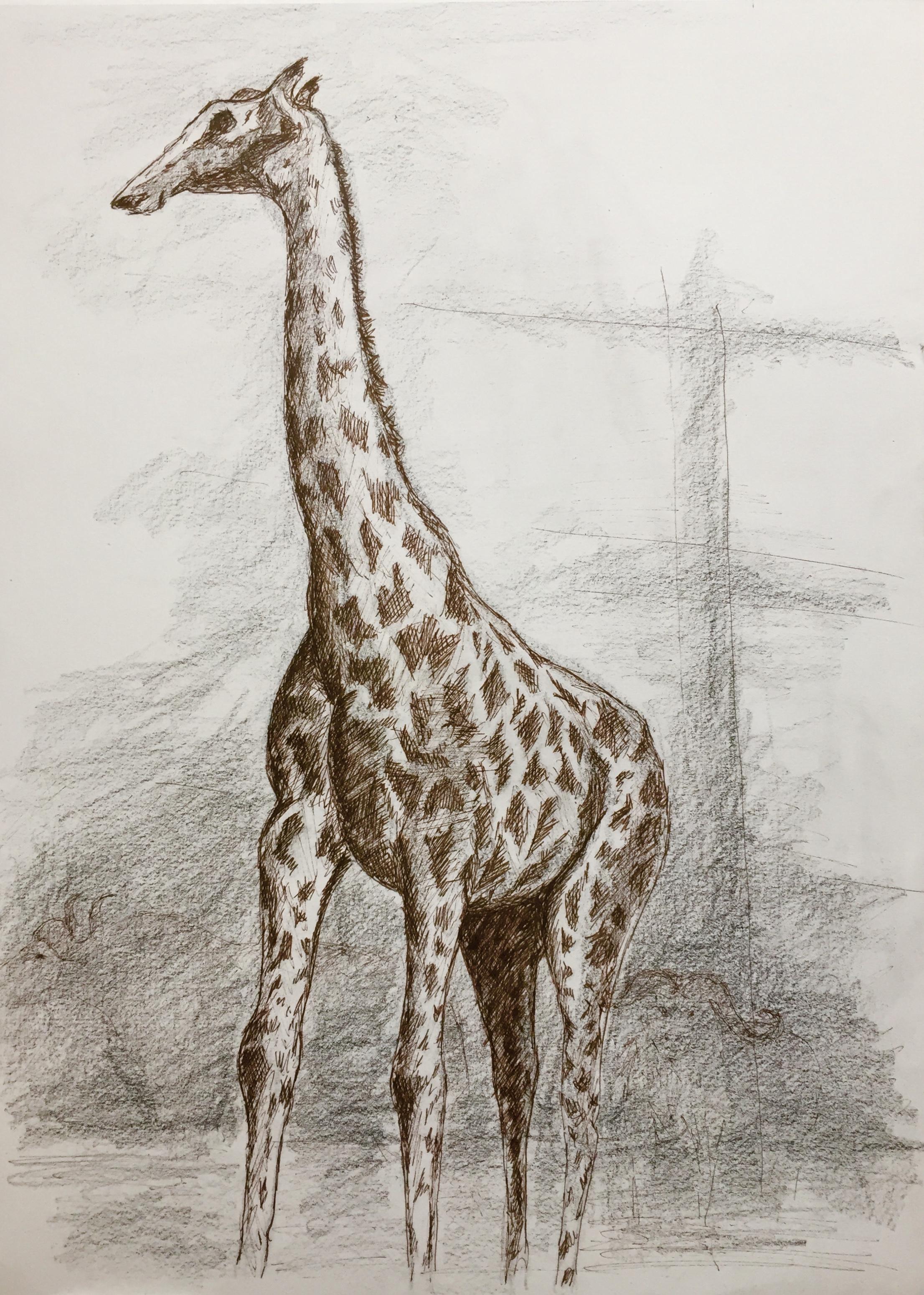 Dessin de girafe crayon de couleur et graphite  cours de dessin
