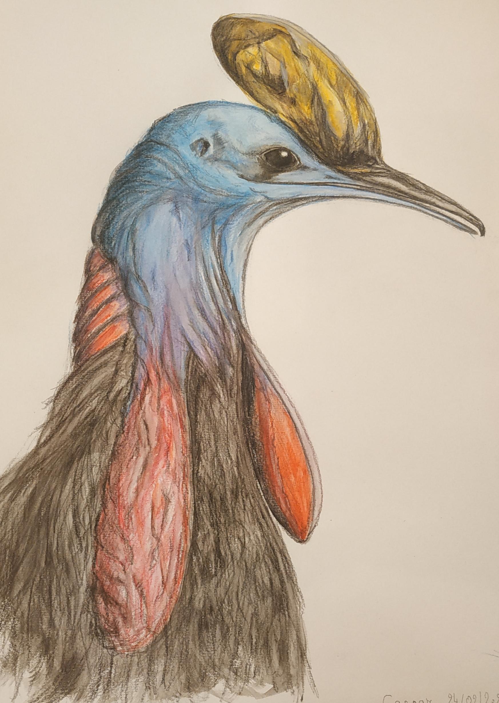 Dessin Animalier casoar couleur sur papier  cours de dessin