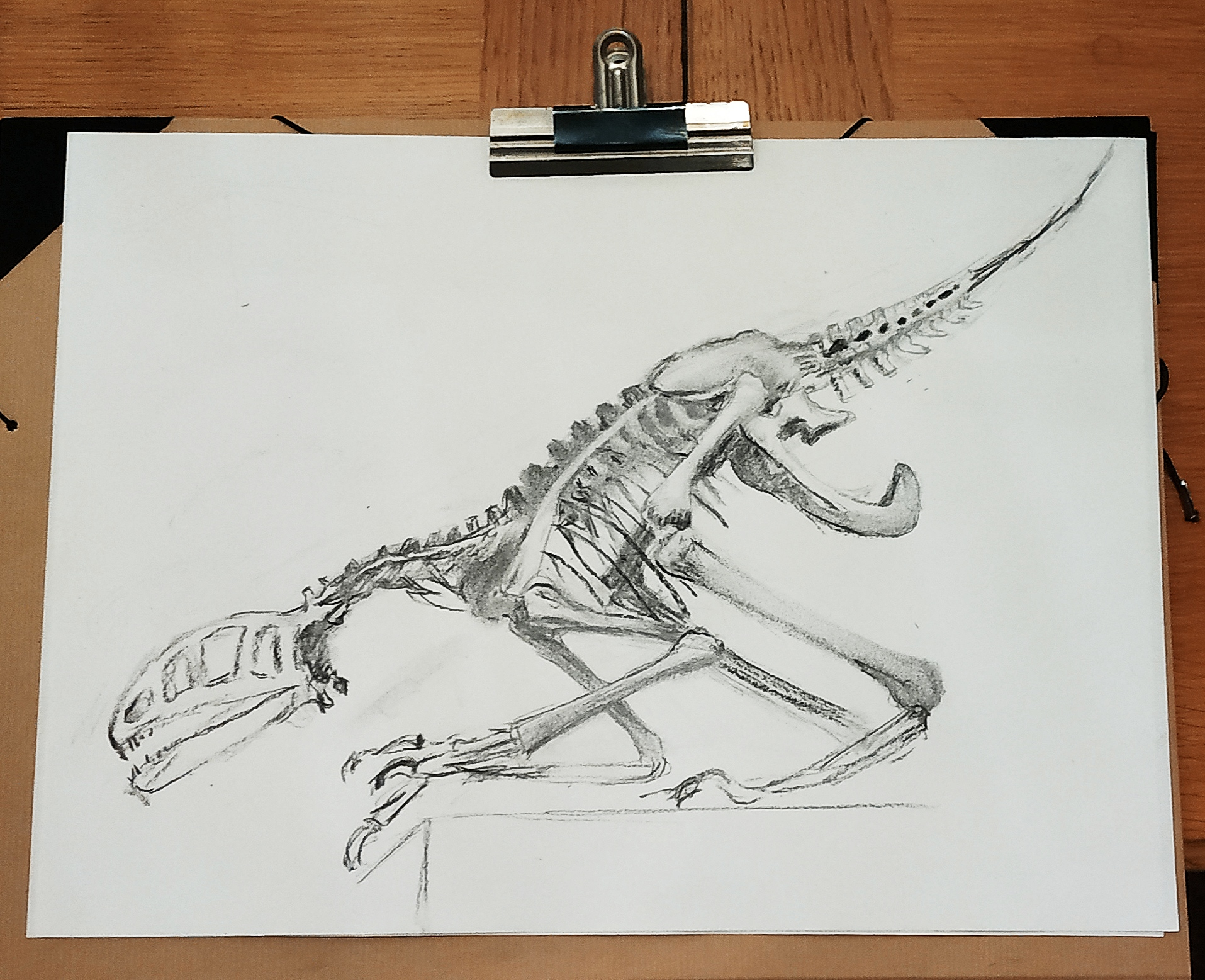 Dessin dinosaure fusain sur papier  cours de dessin