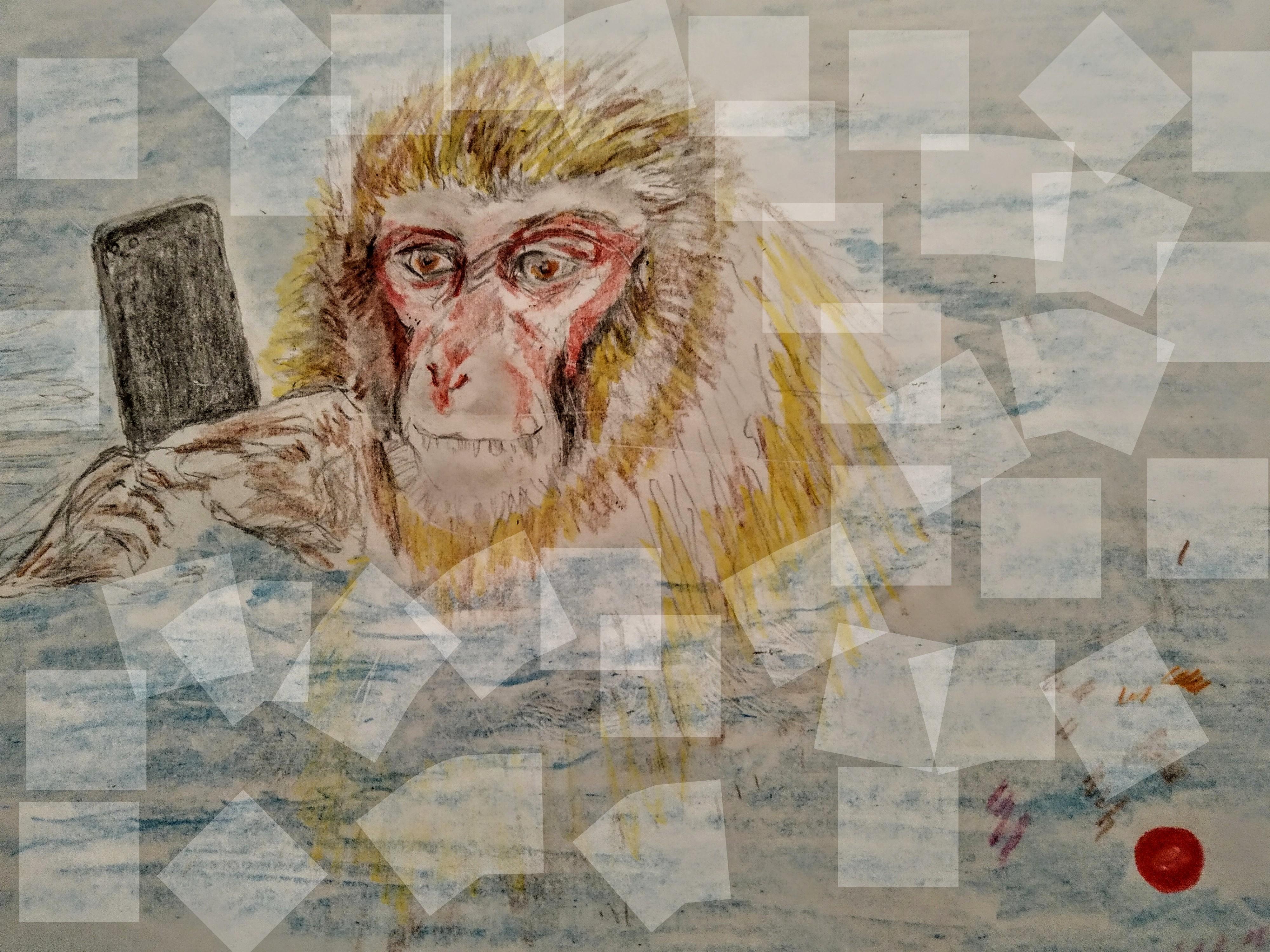 Dessin couleur macaque singe  cours de dessin