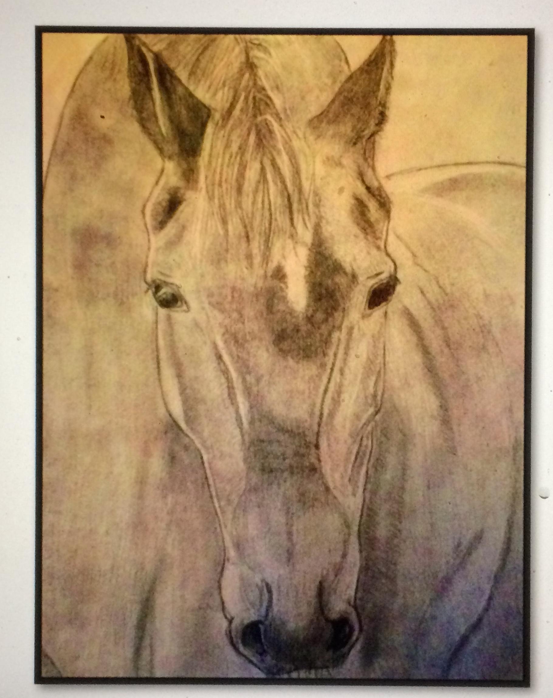 Dessin t�te de cheval  cours de dessin