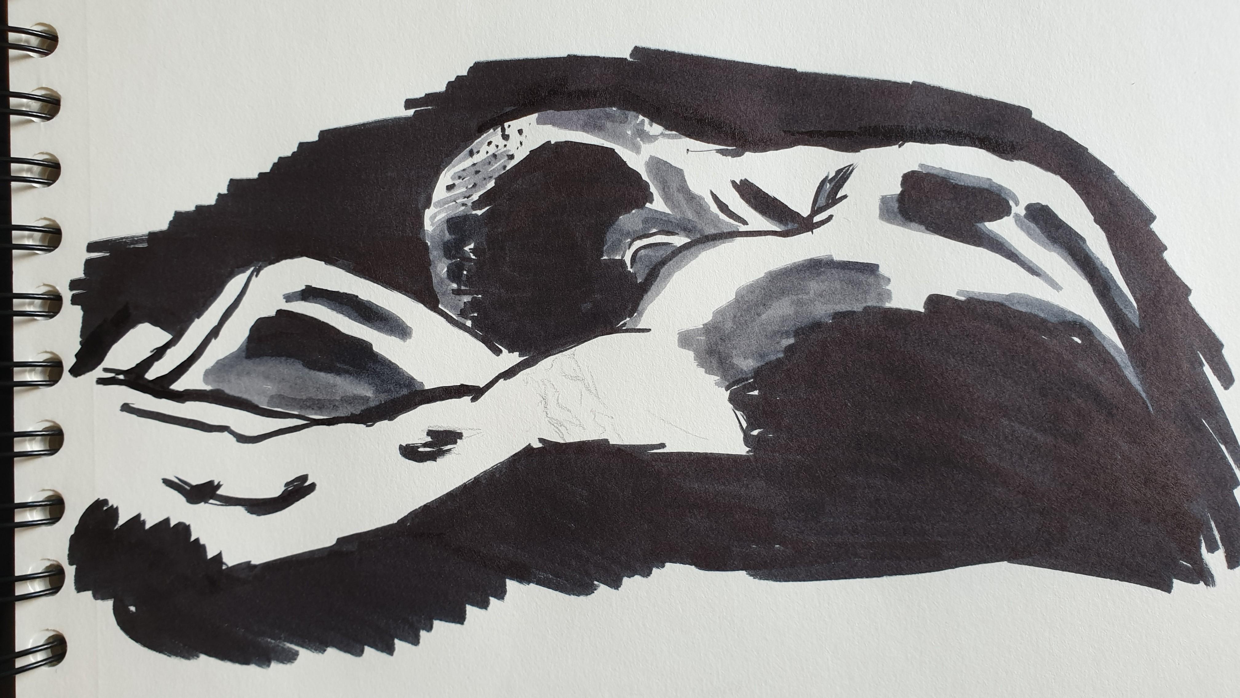 croquis dessin dos encre de chine   cours de dessin