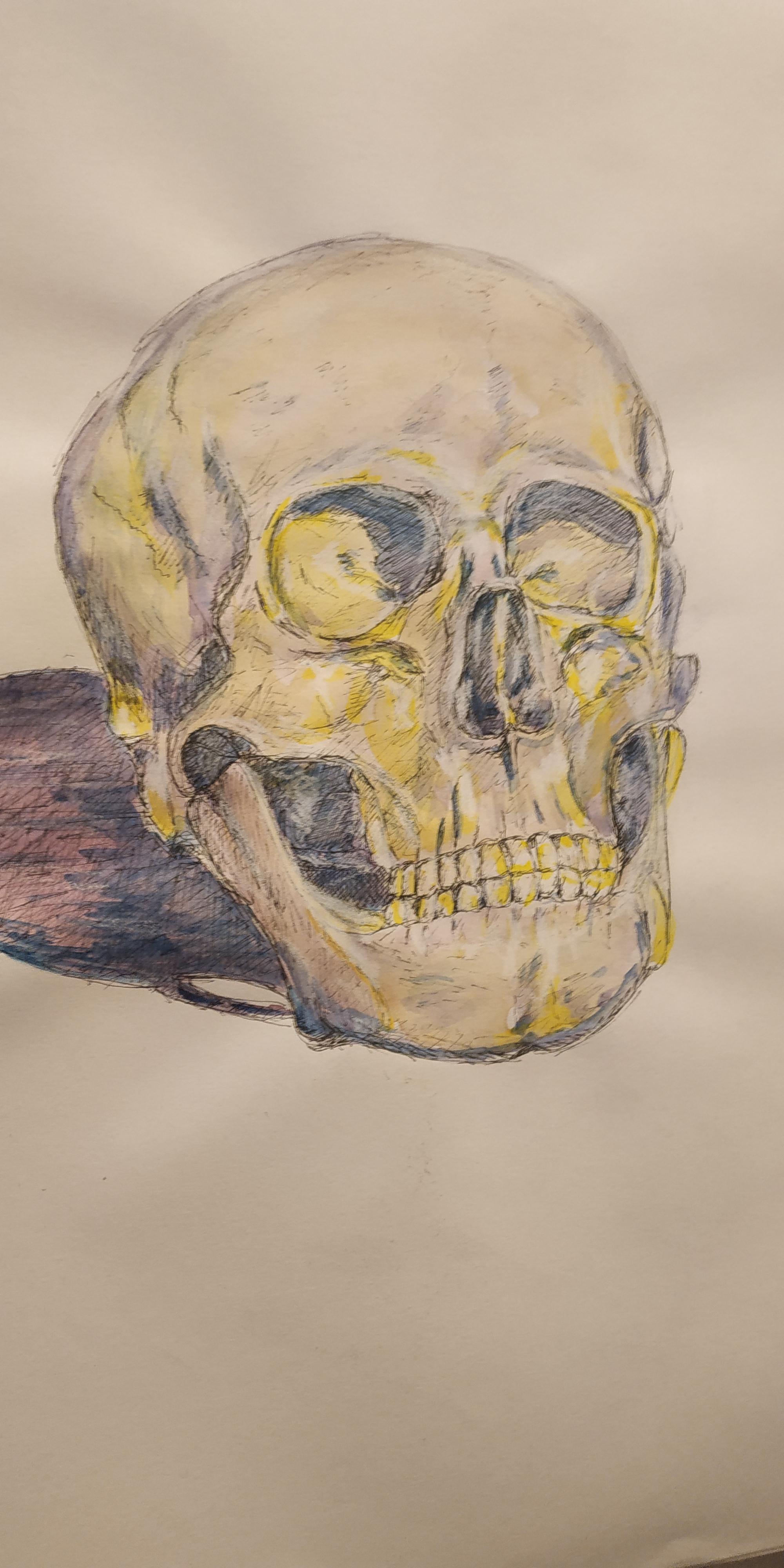 Cr�nes humains dessin couleurs  cours de dessin