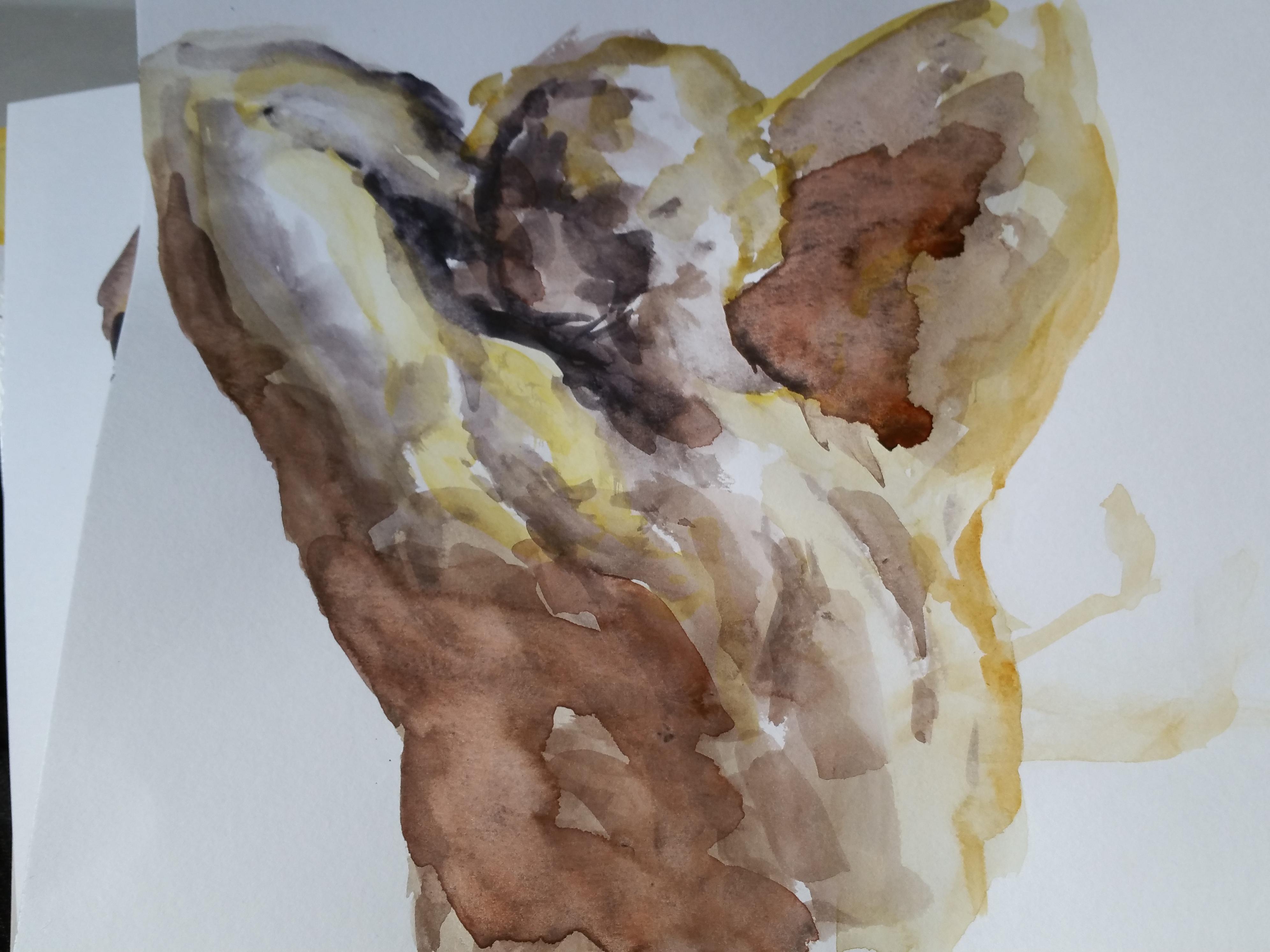 Étude à l'aquarelle muscle du dos sur papier  cours de dessin